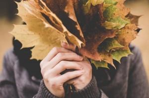 maple-leaves-1030957_1280